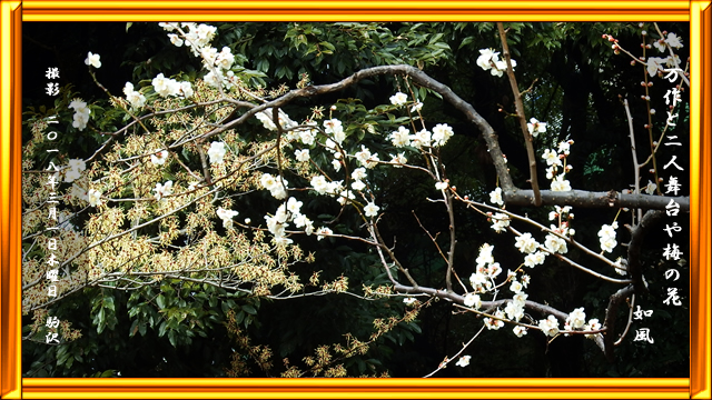 梅の花/万作